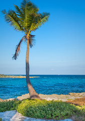 Lone palm tree. Beautiful tropical landscape, blue sky and sea in the background. Vertical layout.