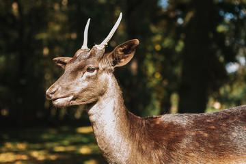 A young deer in its natural habitat