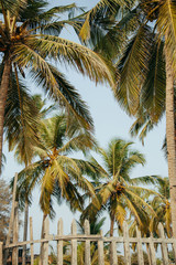 palm trees in the tropics in a summer sunny day