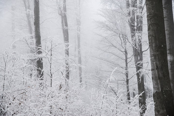 Stunning landscape, frosted trees
