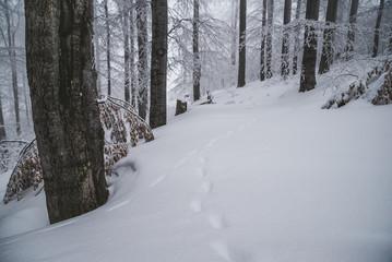 Stunning winter forest