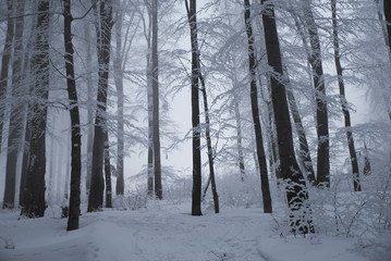 Stunning landscape, frosted trees branched in a forest