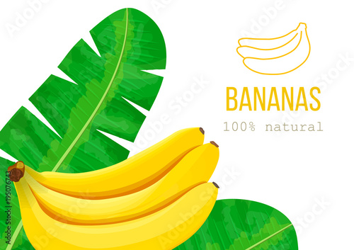 ripe bananas and palm leaves place for text label template