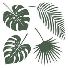 Tropical leaves 001