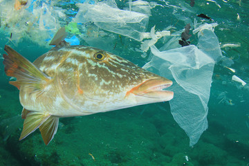 Plastic ocean pollution and fish. Plastic bags dumped in sea contaminate seafood