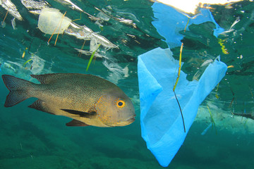 Fish swims among plastic ocean pollution. Seafood contamination