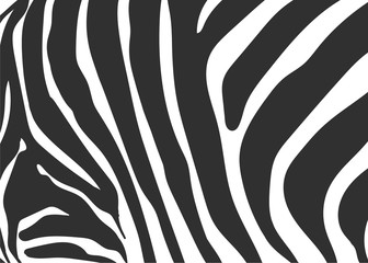 zebra texture black and white pattern background vector illustration