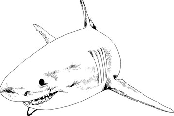 great white shark drawn in ink freehand sketch logo