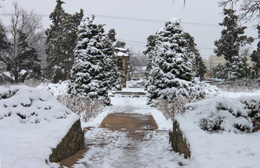 Steep icy driveway and snow covered evergreen trees in urban residential neighborhood