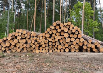 Pine logs, problem of deforestation