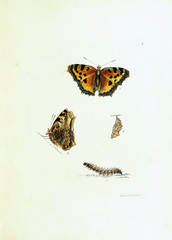 Illustration of butterflies on white background.