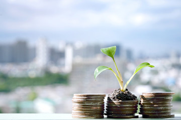 Growth of money. City blur  background.Financial concepts and business