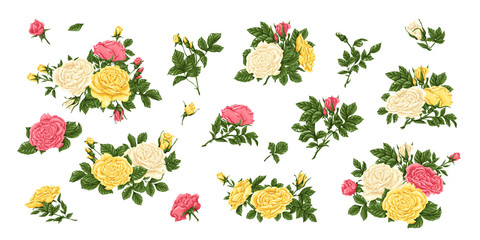 Big set of pink, yellow white roses, bouquets, flowers and buds.