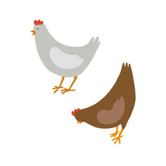 Two chicken, brown and white