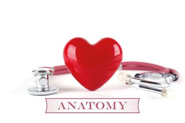 HEALTH CONCEPT ANATOMY