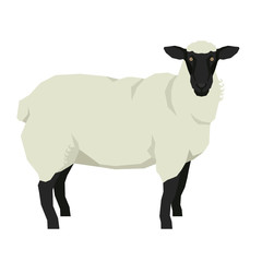 Sheep Isolated vector illustration Farm animals Geometric style Black and white