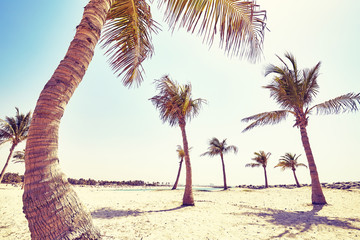 Vintage toned picture of coconut palms on a beach, summer holiday concept.