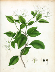 Illustration of flower.
