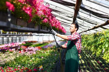 Gärtner gießt bunte Blumen im Gewächshaus einer Gärtnerei - Verkauf von Floristik im Blumenhandel