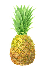 Pineapple painted with watercolors isolated on white background.