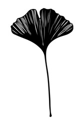 Hand drawn ginkgo biloba leaf vector black on white background