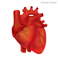 Human Heart Isolate. Angioplasty is an endovascular procedure to widen narrowed or obstructed arteries or veins, typically to treat arterial atherosclerosis