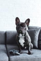 Foto op Aluminium Franse bulldog Black Frenchie sitting on sofa by joystick