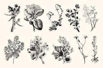 Botanica Line Art - Vintage Floral Engravings