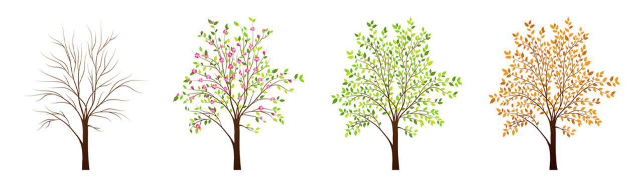Four seasons of tree vector