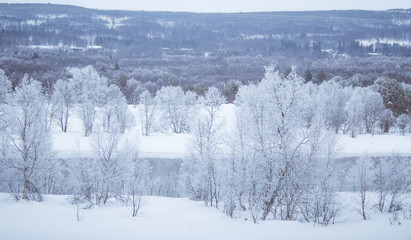 Beautiful frozen river with a trees on a bank. White winter landscape of central Norway. Light scenery.