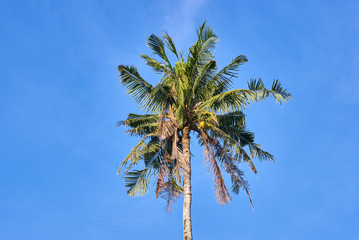 Palm on blue sky