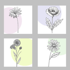 Set of wild, black and white field flowers - poppy, chamomile, cornflower, daisy, sketch vector illustration