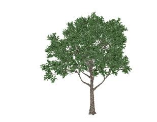 Apple tree. Isolated on white background. Vector illustration.