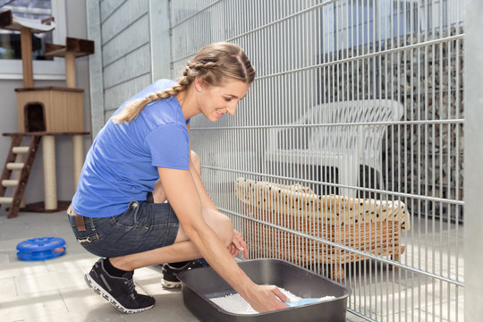 Zookeeper cleaning cat toilet in animal shelter taking care