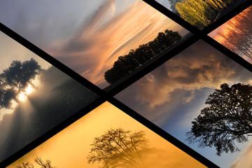 galerie de photos d'arbres