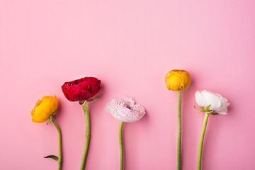 Colorful flowers on a pink background.