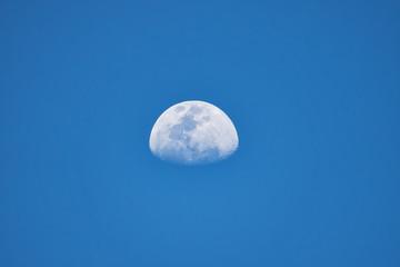 Mond bei Tageslicht