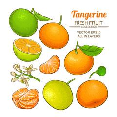 tangerine fruit vector set