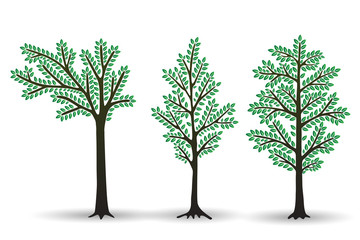Set of Stylized abstract  trees with green foliage isolated on white background. Vector illustration.