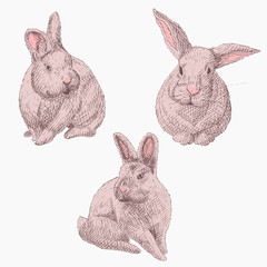 set rabbits hand-drawn pencil sketch