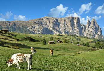 die Seiser Alm mit Blick auf den Schlern,Südtirol,Italien