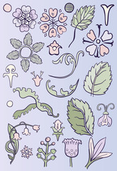 Hand drawn floral elements