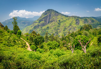 View from Little Adam's Peak. Mountain landscape in Sri Lanka,Little Adam's Peak Ella, Sri Lanka