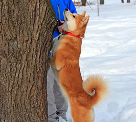 the dog wants to play with a squirrel