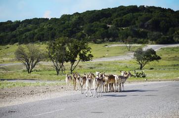 Safari nature reserve with wild animal herd.