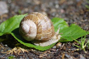 escargot dans la nature