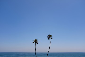 Two palm trees over the ocean.