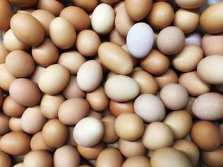 Texture backdrop background Group of round, oval, oblong chicken eggs of high quality white, beige, brown, pastel colors