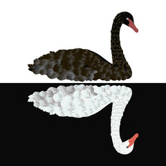 Black swan on white background White swan on black background vector isolated illustration