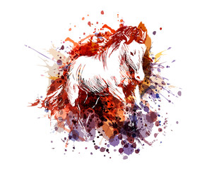 Vector color illustration of a horse